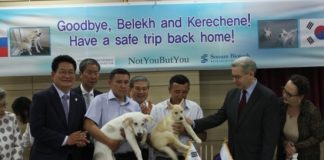 NEFU scientists and Sooam Foundation presented cloned puppies of the Yakut hunting breed in Korea